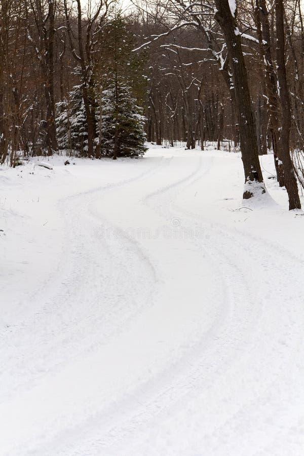 Het winden van Sneeuwweg door Bomen stock afbeeldingen