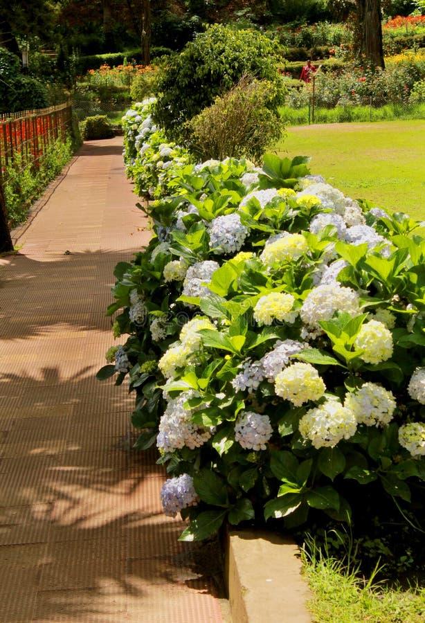 Het wit bloeit nutteloos met manier in het kodaikanal bryant park royalty-vrije stock afbeeldingen