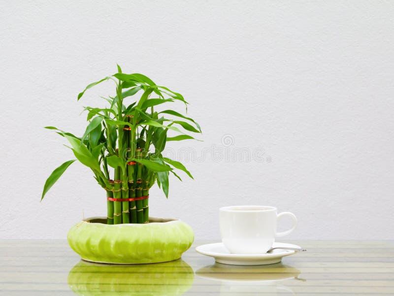 Het wit van de koffiekop en Bamboeboom in pot op de houten glaslijst een achtergrond van de cementmuur royalty-vrije stock foto's