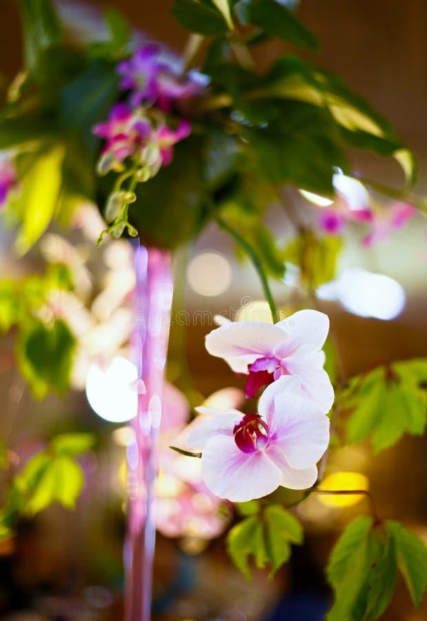 Het wit van de orchidee stock fotografie