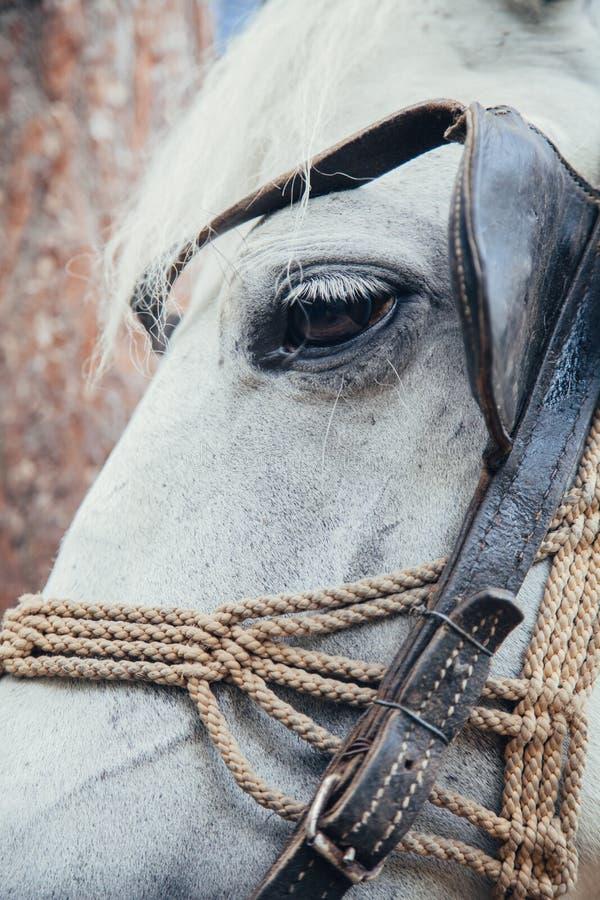 Het witte Hoofd van het Paard royalty-vrije stock foto