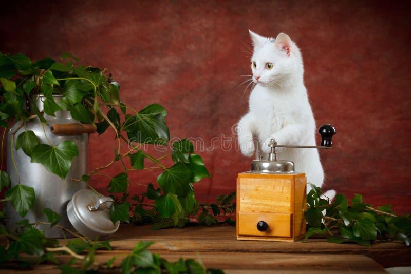Download Het Witte Katje Tussen Melk Kan En Koffiemolen Stock Afbeelding - Afbeelding bestaande uit molen, huisdier: 29503951