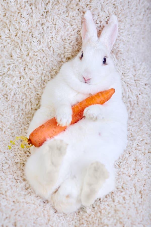 Het witte konijn isoleerde op wit die een wortel houden stock afbeelding
