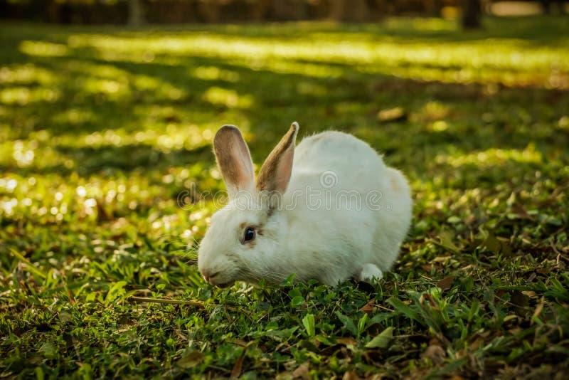 Het witte konijn loopt in het bos royalty-vrije stock foto