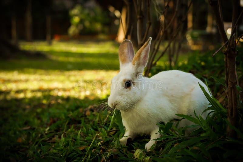 Het witte konijn loopt in het bos royalty-vrije stock fotografie