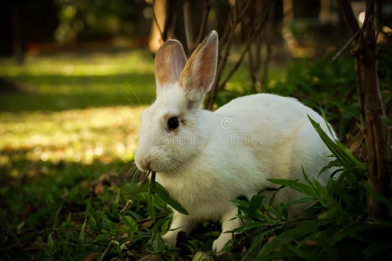 Het witte konijn loopt op de open plek stock foto's