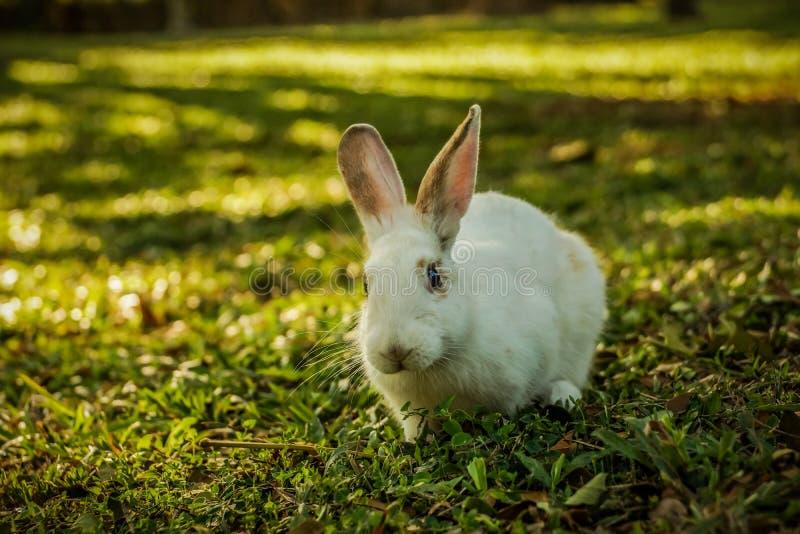 Het witte konijn loopt op de open plek stock foto