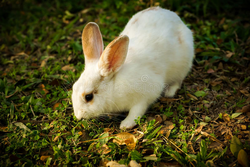 Het witte konijn loopt op de open plek royalty-vrije stock foto's
