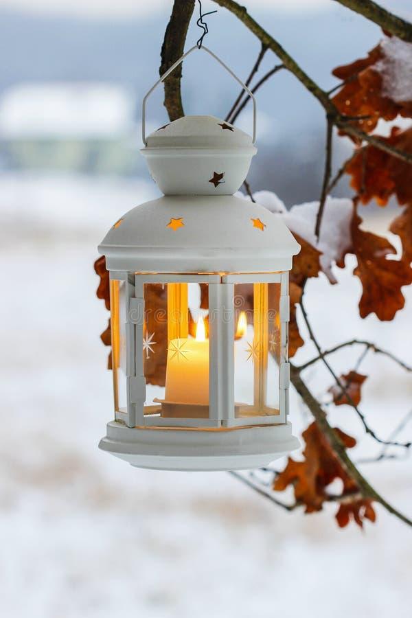 Het witte lantaarn hangen op eiken tak royalty-vrije stock afbeelding