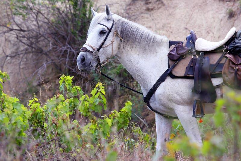 Het witte zadel van het paardtoestel op de aard stock afbeeldingen