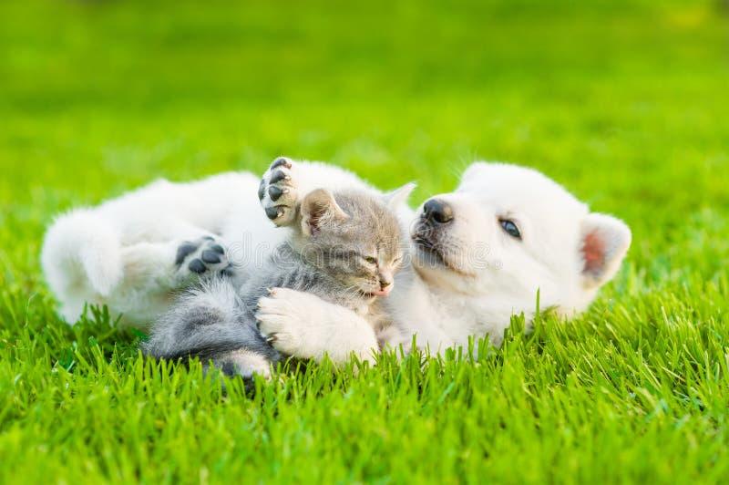 Het witte Zwitserse Herders` s puppy spelen met uiterst klein katje op groen gras royalty-vrije stock fotografie