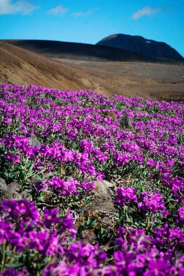 Het woestijnlandschap met heldere bloemen in de voorgrond royalty-vrije stock afbeeldingen
