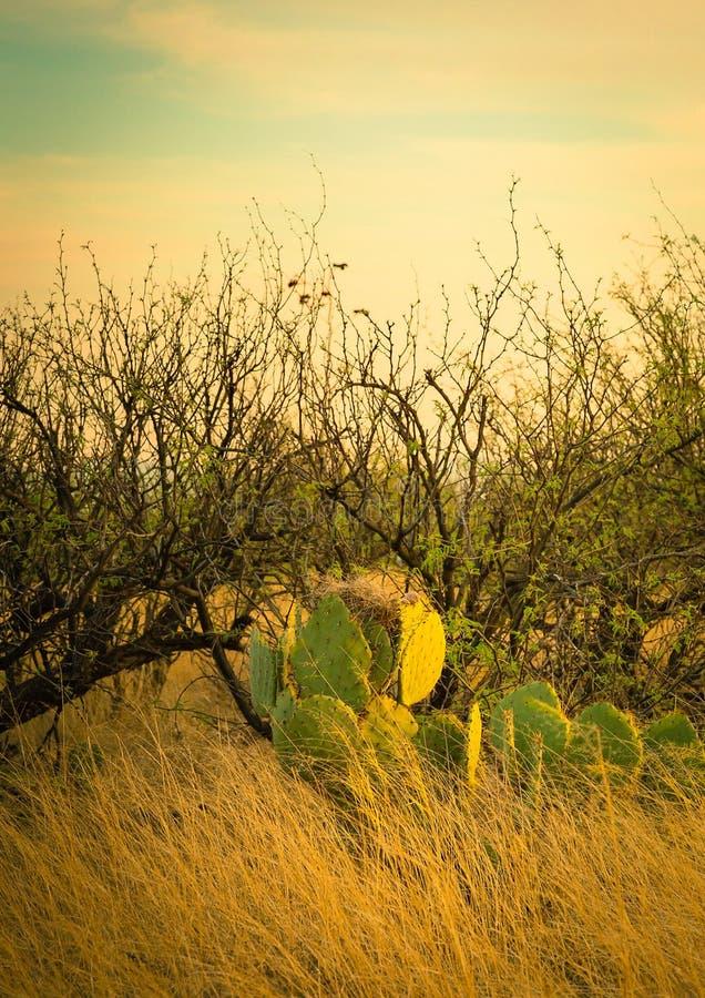 Het woestijnleven stock foto