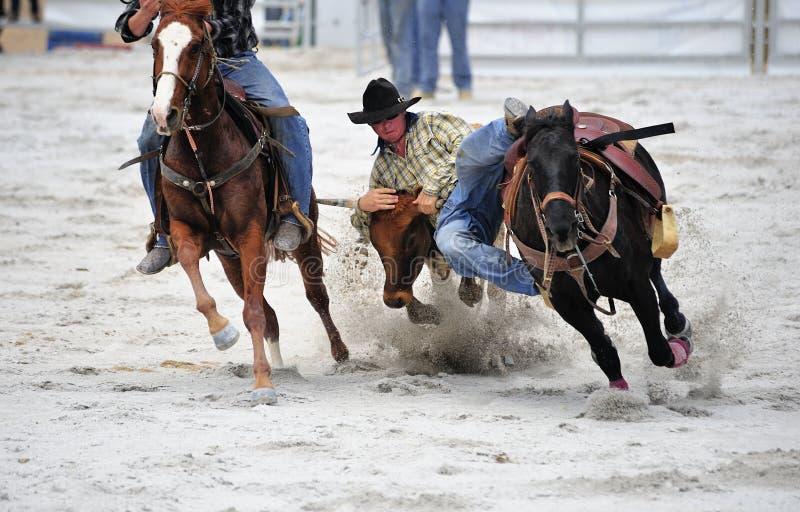 Het Worstelen van de rodeo stock foto's