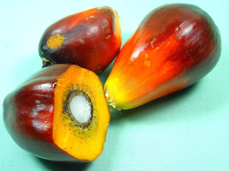 Het Zaad van de palmolie royalty-vrije stock foto's