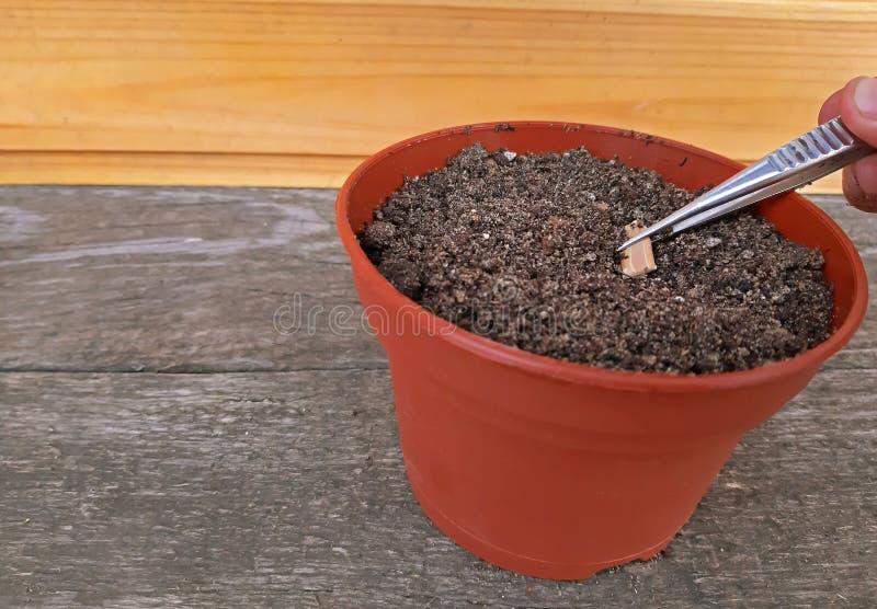 Het zaaien van een zaad in potting grond met Exemplaarruimte stock afbeelding