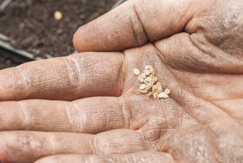Download Het Zaaien Van Tomatenzaden In Grond. Stock Foto - Afbeelding bestaande uit nieuw, holding: 29500950