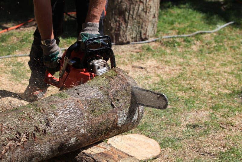 Het zagen van houten boomstam met een kettingzaag stock fotografie