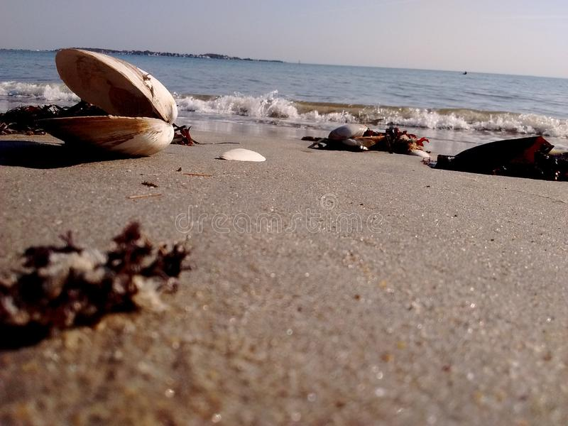 Het zandalgen van het golftweekleppige schelpdier in het strand stock afbeeldingen