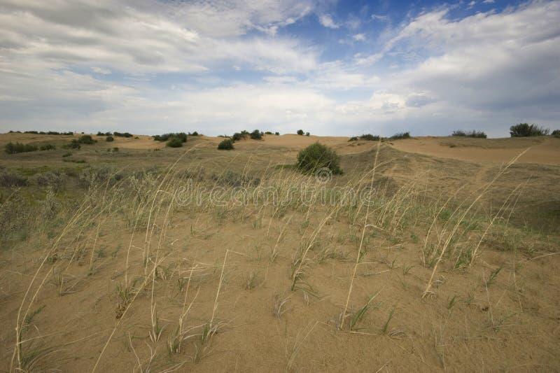Het Zandduinen van Saskatchewan stock fotografie