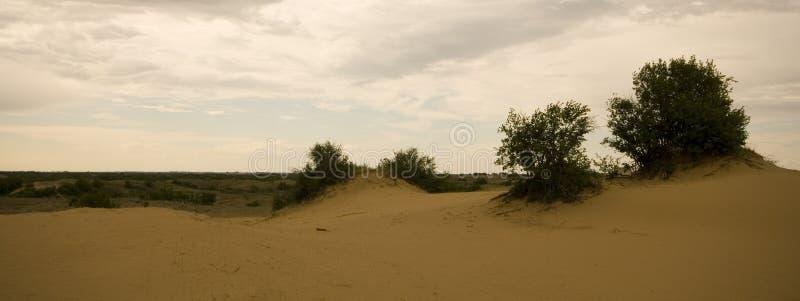 Het Zandduinen van Saskatchewan stock foto's