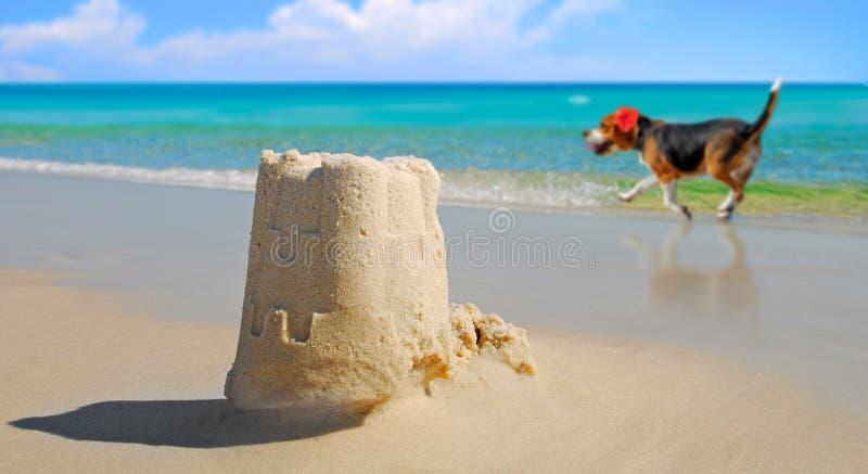 Het Zandkasteel van de hond door Mooie Oceaan stock foto