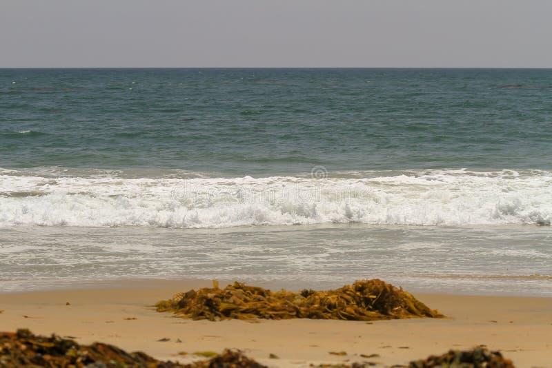 Het zeewier en de wrakstukken wasten omhoog op een zandig strand stock foto's