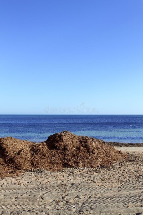 Het zeewier van algen droog op Mediterraan strand royalty-vrije stock fotografie