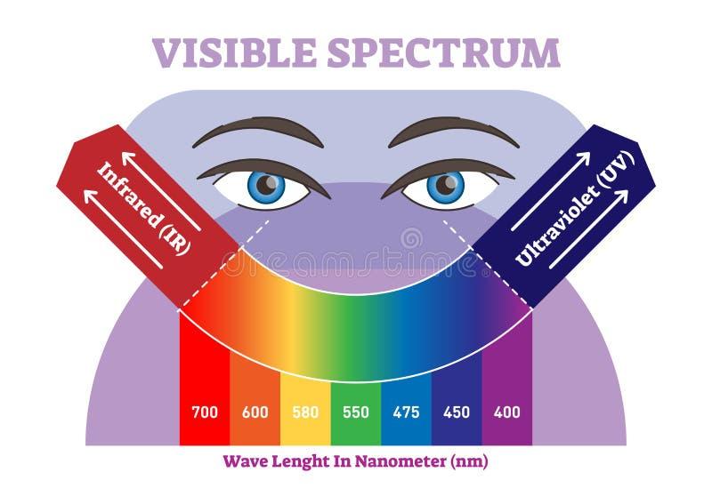 Het zichtbare diagram van de spectrum vectorillustratie, kleurenschema van infrared aan ultraviolette kleurenscala royalty-vrije illustratie