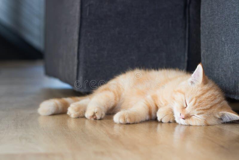 Het zieke katje krijgt kattengriep en slaap royalty-vrije stock afbeelding