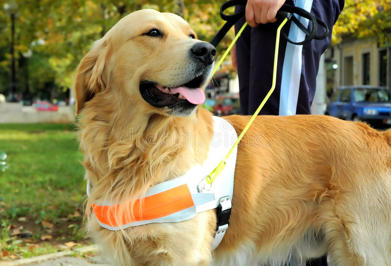 Het zien van de Hond van het Oog royalty-vrije stock foto