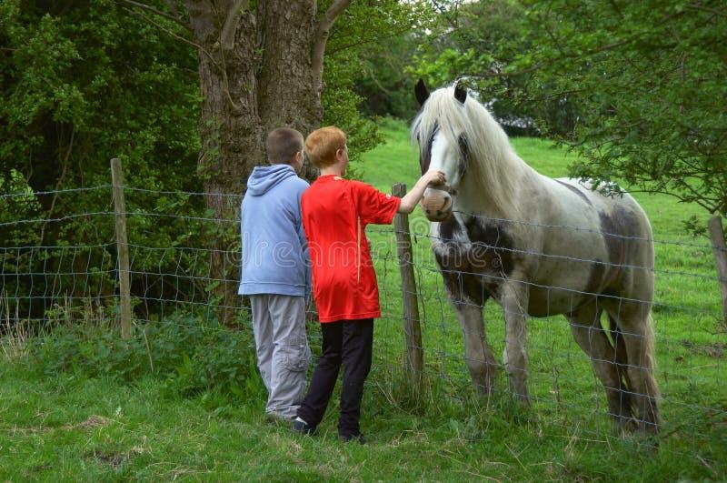 Het zien van het Paard royalty-vrije stock foto's