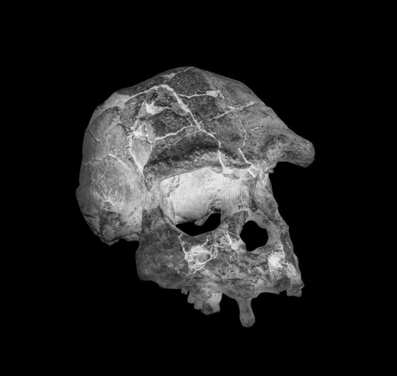 Het zij x-ray beeld van de gezichtsschedel royalty-vrije stock afbeelding