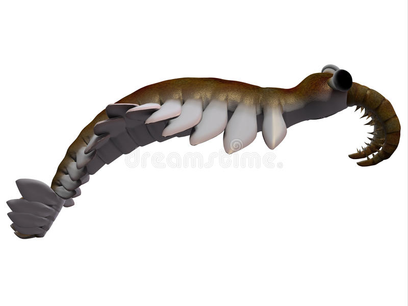 Het Zijprofiel uit het Cambrium van Anomalocaris vector illustratie