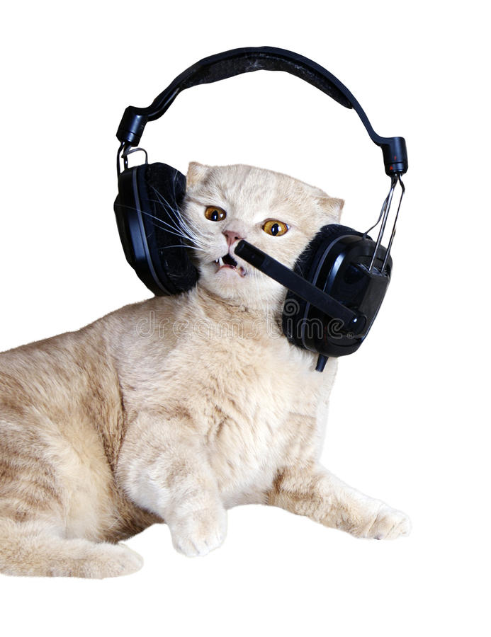 Het zingen kat of katje in hoofdtelefoons het luisteren royalty-vrije stock foto's