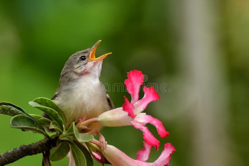 Het zingen vogel