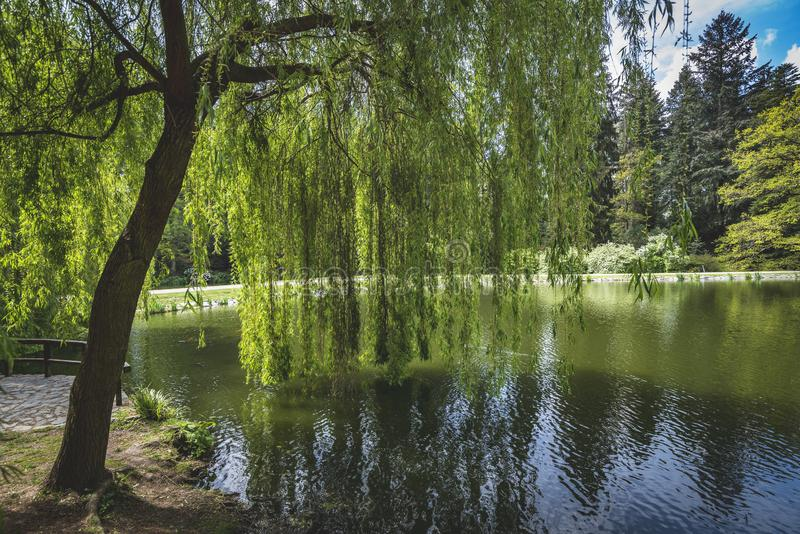 Het zitten in het park in de Tsjechische Republiek van Pruhonice Praag stock fotografie