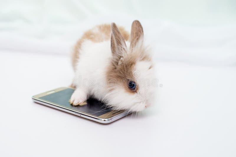Het zoete konijntje onderzoekt de camera en de poot wat betreft het schermsmartphone stock afbeelding