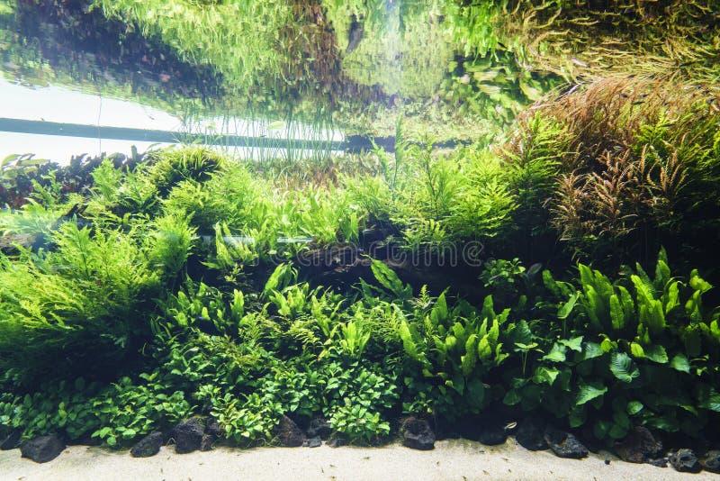 Het zoetwateraquarium van de aard in de stijl van Takasi Amano royalty-vrije stock fotografie