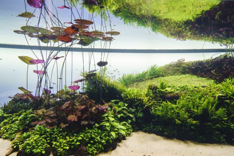 Het zoetwateraquarium van de aard in de stijl van Takasi Amano stock foto's