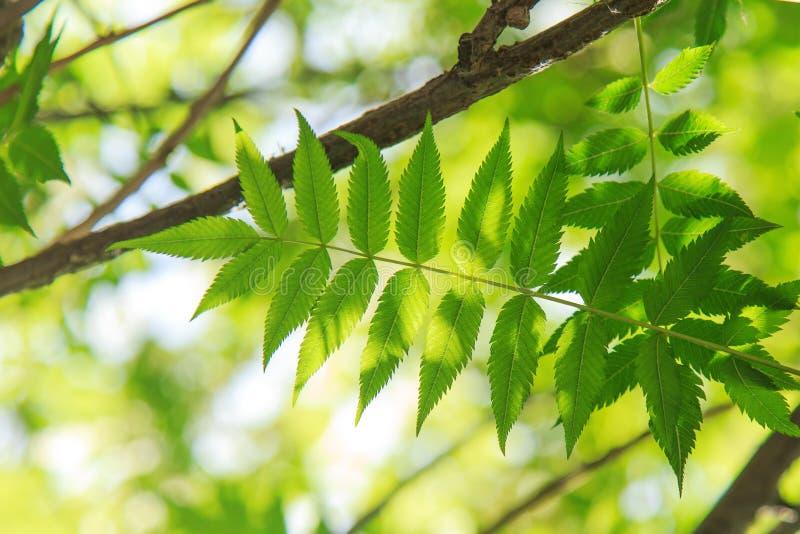 Het zonlicht doordringt de bladeren royalty-vrije stock fotografie