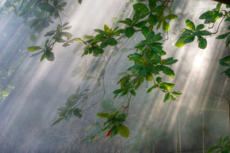 Het zonlicht van de ochtend in vegetatie royalty-vrije stock foto's