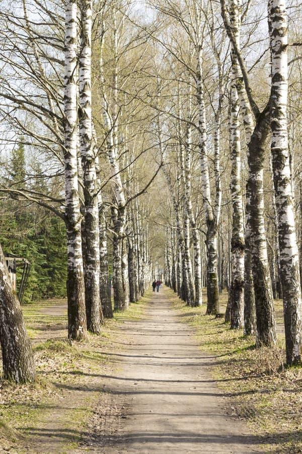 Het zonnepark heeft oude bomen H stock afbeeldingen