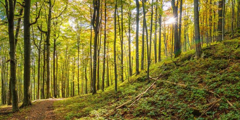 Het zonnige Bos van de Herfst stock fotografie
