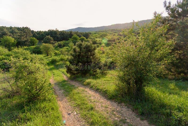 Het zonnige landschap van de wegzonsondergang op een gebied stock foto's