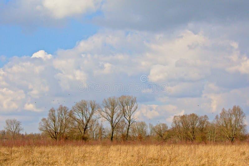 Het zonnige moeraslandschap met riet en naakte de winterbomen en grote pluizige cumulus betrekt stock afbeeldingen