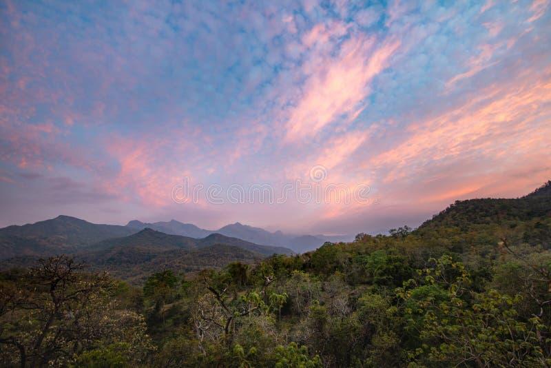 Het zonsondergangbos royalty-vrije stock fotografie