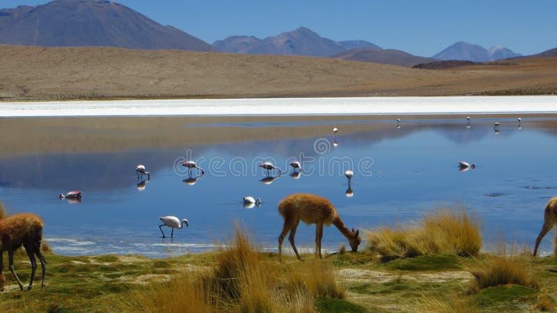 Het zoute meer van Bolivië stock afbeeldingen