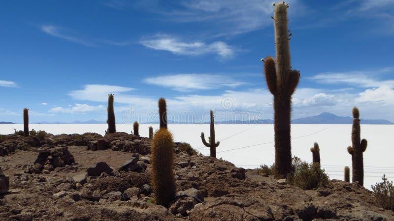 Het zoute meer van Bolivië royalty-vrije stock foto