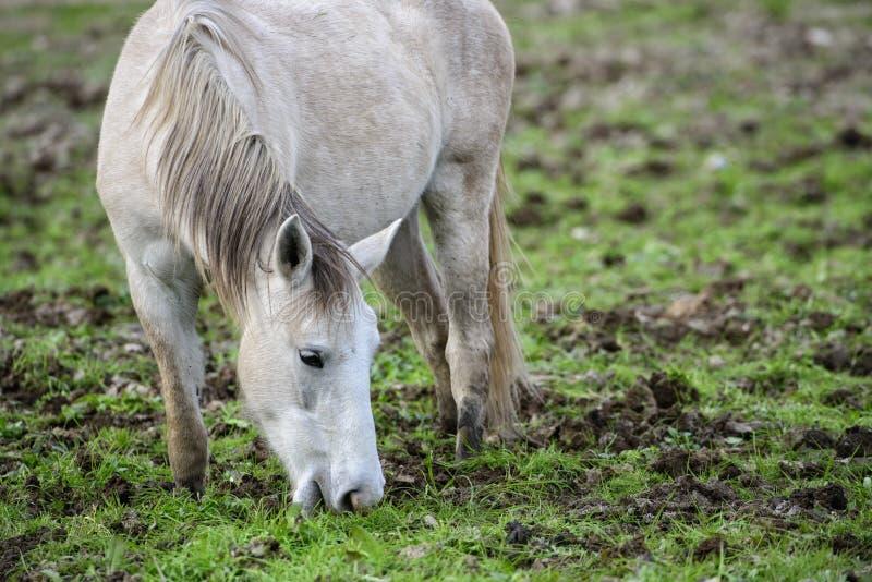 Het zoute portret van het Rivierwild paard stock foto's